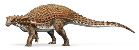 nodosaur-pic